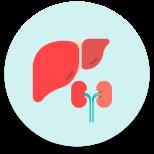 Liver & Kidney Transplant